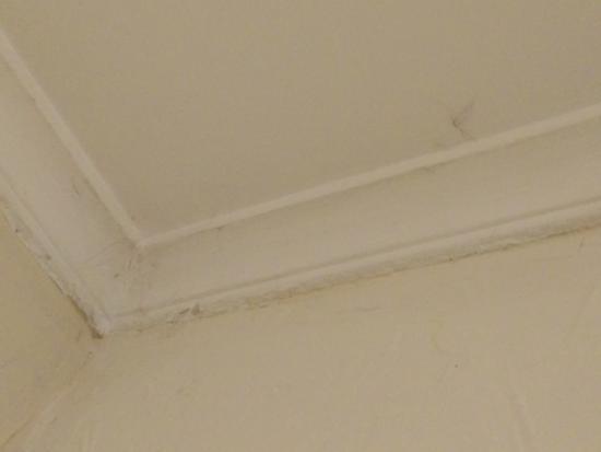 Hotel Presidente: pedí una habitación para 2 y había arañas con nosotros