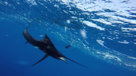 Jaco Tours & Sportfishing: Underwater shot