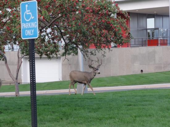 United States Air Force Academy: Wildlife on Campus