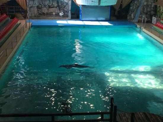 Yaroslavsky Dolphinarium