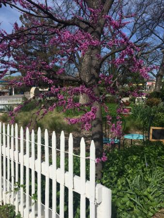 Hico, TX: the garden