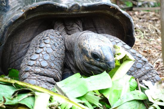 Omusee Guesthouse: Auf dem Anwesen wohnen auch ein paar Schildkröten. Leider haben sie nicht all zu viel Platz.