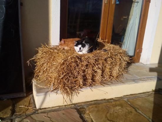 Ardrahan, Irlanda: Cats giving the right example on how to lay back and enjoy the peaceful life