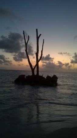 Vista Sol Punta Cana Foto