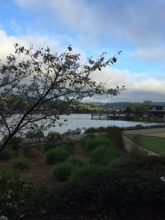 Acqua Hotel Mill Valley: My groundfloor view from my verandah