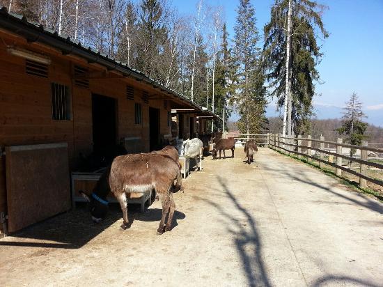 Foto di il rifugio degli asinelli sala - Sala biellese asini ...