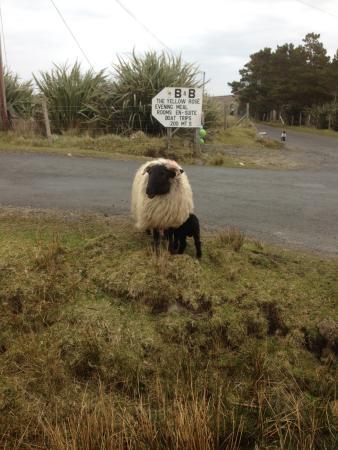 Belderrig, Irlande : Experience 7