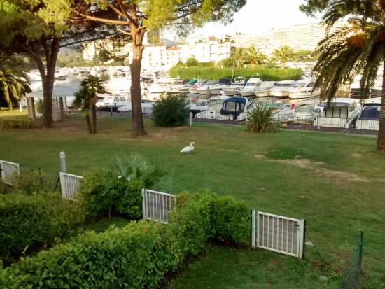 Residence Carre Marine: Blick vom Balkon auf den Jachthafen (stehendes Gewässer)
