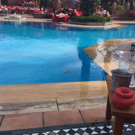 Sofitel Marrakech Lounge and Spa : photo1.jpg