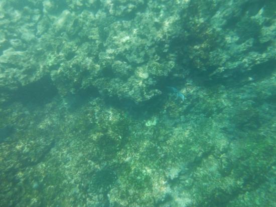 eserva hermosa de Nayarit, Islas Marietas, son fastasticas, se puede practicar snorkeling