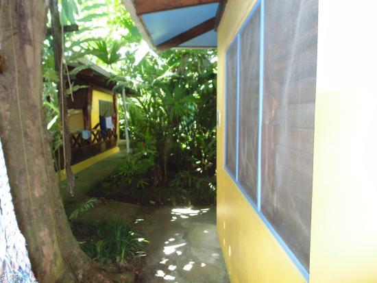 Hotel Guarana : El acceso a la habitación pasando por un jardín selvático maravilloso