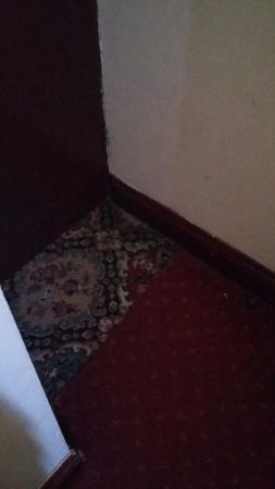 Hotel Olympia: Two different carpets on the bedroom floor at the entrance to the room