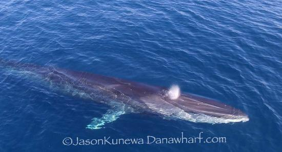 Dana Point, CA: Fin Whale