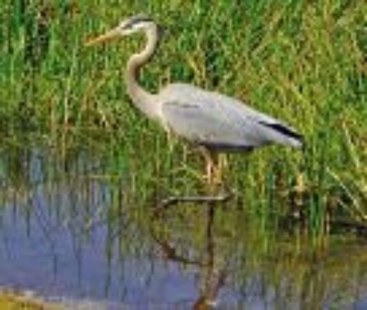 Wilmington Water Tours: Just some of the birds you will see