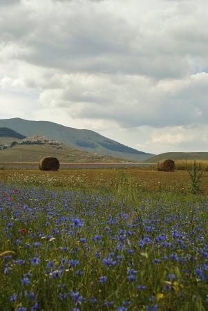 Monti Sibillini: zicht op Castelluccio