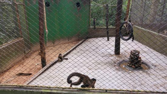 Zoologico Municipal de Cascavel - Danilo Jose Galafassi