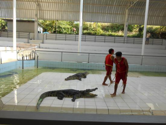 Crocodile Farm and Sea Aquarium