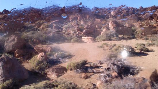 Entre rocas hay vida las plantas y vegetaciones for Las rocas tenerife