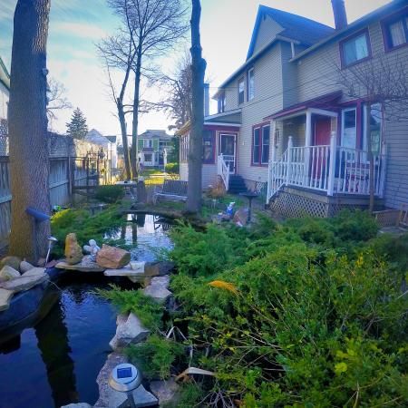Blue Gables Bed & Breakfast: Koi pond