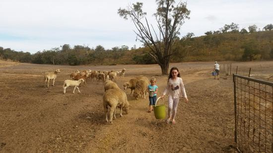 Bindoon, Australia: 20160325_152857_large.jpg