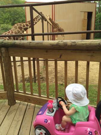 Zoo Of Acadiana : Norah is 1 and loved this visit especially the aviary and fish (Nemos).