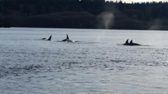 Campbell River, Canadá: Amazing day marine life watching...