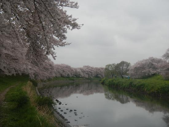 Motoarakawa Riverbank