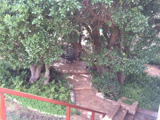 Milkwood Lodge: Aussicht & garten