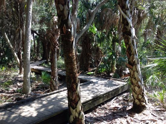 Crystal River, FL: Nature path to the beach