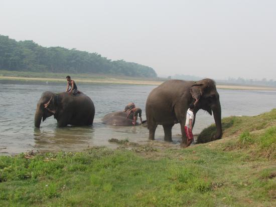 Narayani Safari Hotel: Bagno degli elefanti