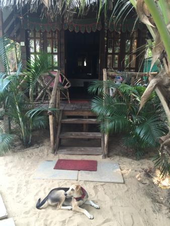 buddy picture of little india beach cottages calangute rh tripadvisor com