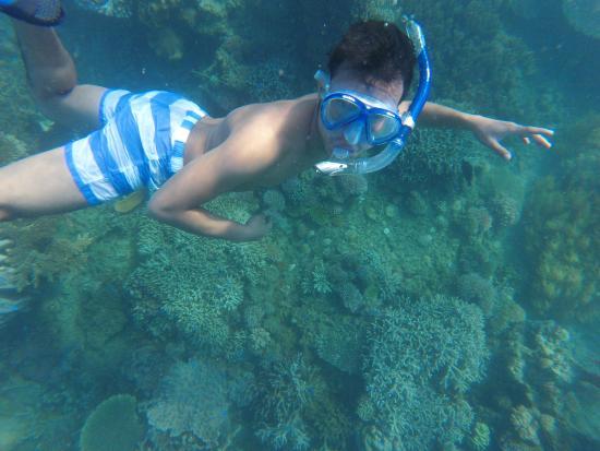 Dos Palmas Island Resort & Spa: Snorkeling