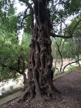 L 39 arbre souhait picture of jardin des plantes - Jardin des plantes de montpellier ...
