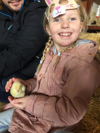 Bolton, UK: Holding a chick
