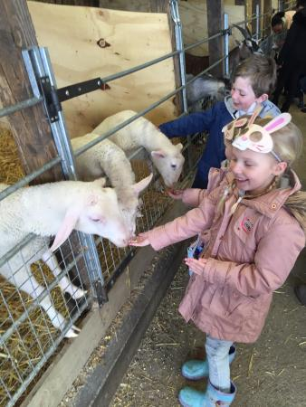 Bolton, UK: Feeding the lambs