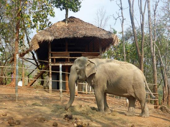 Elephant Special Tours : im Camp der Stiftung
