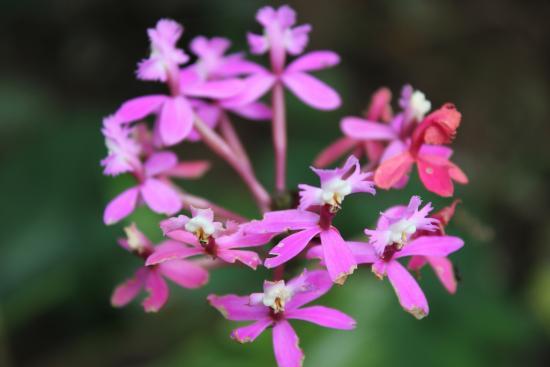 flowers of peru picture of lorenzo expeditions cusco tripadvisor