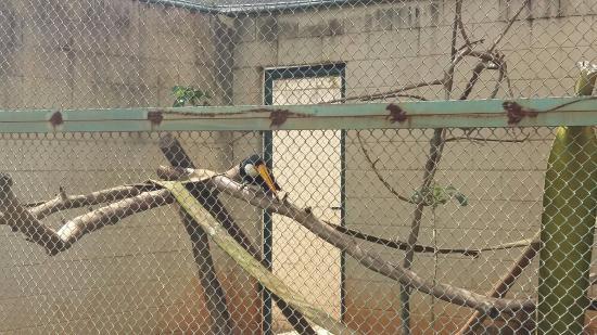 Limeira Municipal Zoo
