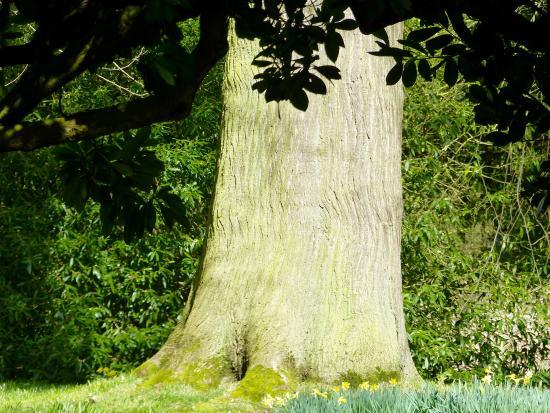 Broseley, UK: A Nice Old tree