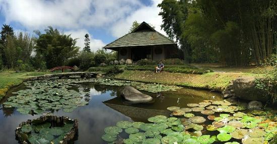 Parte del jard n japon s picture of jardin botanico for Jardin lankester