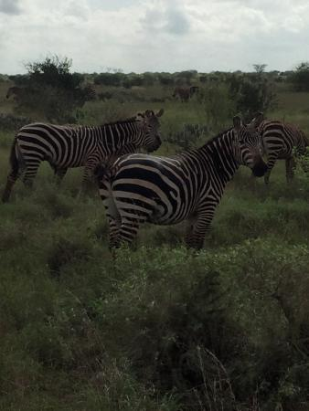 Kennedy Tours and Safaris - Day Tours: photo0.jpg