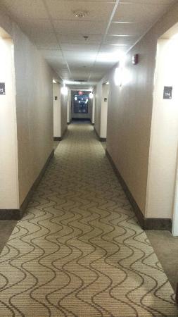 Comfort Inn Biltmore West Foto