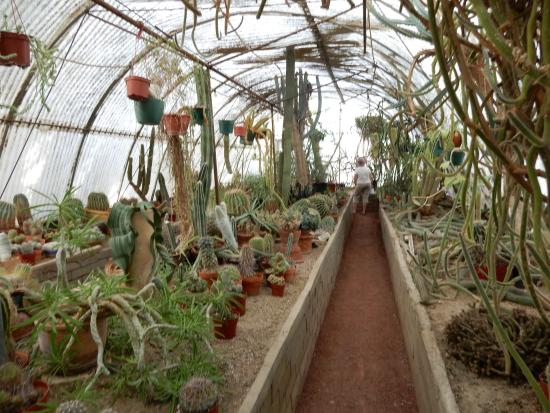 Moorten Botanical Garden: Stunning Greenhouse