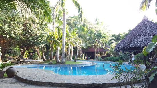 b9fde232cdd2d photo0.jpg - Picture of Alona Tropical Beach Resort