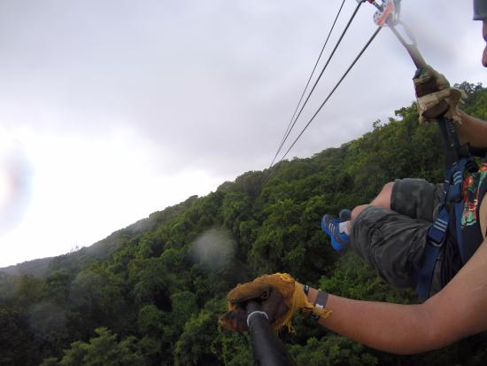 Clip N  Zip Canopy Tours: View of the tree tops
