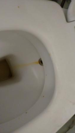 Indiana Hotel: vaso sanitário