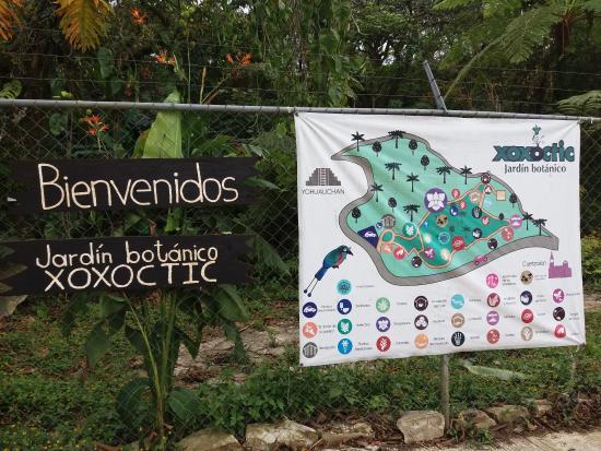 Descripci n de la planta de la vainilla picture of for Plantas de un jardin botanico