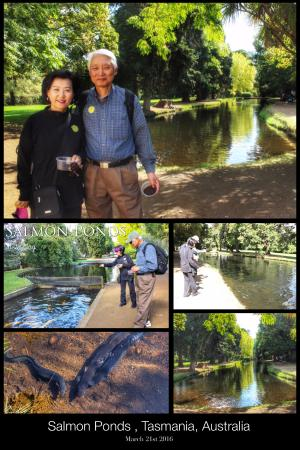 New Norfolk, Australia: We stopped in at the Salmon Ponds. Had a really great time.