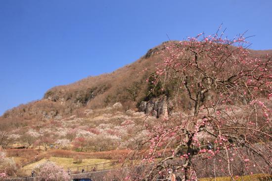 Taman Makuyama