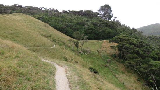 Golden Bay, Nya Zeeland: Track to Wharariki Beach